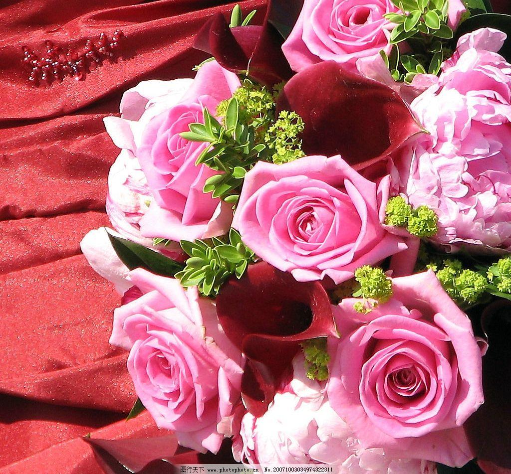 玫瑰花束 玫瑰花 玫瑰