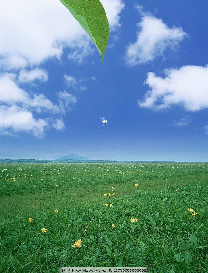 自然景色 绿色 生态 植物 清新 素雅 朦胧 淡雅 图片素材 清新素材