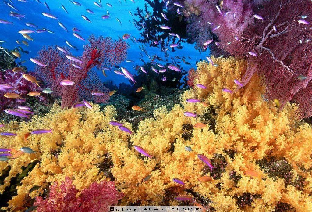 海底景色 海底 自然景观 自然风景 摄影图库 72 jpg
