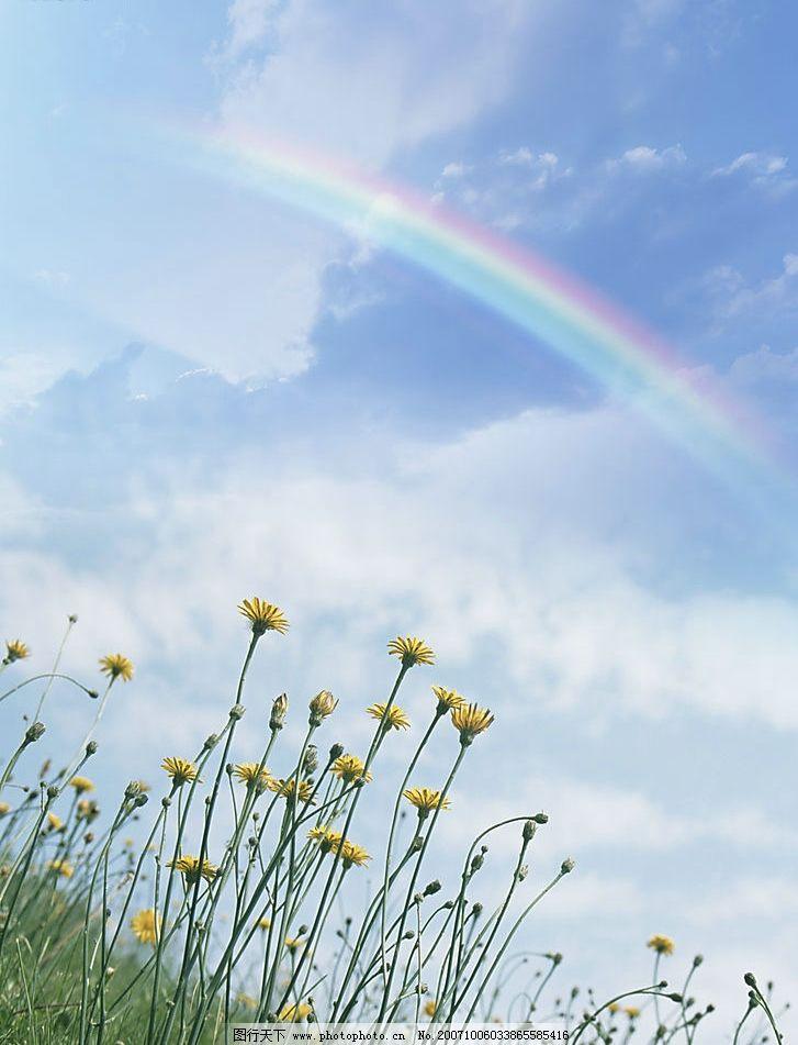 彩虹下的花朵 自然 生态 清新 素雅 朦胧 淡雅 其他 图片素材