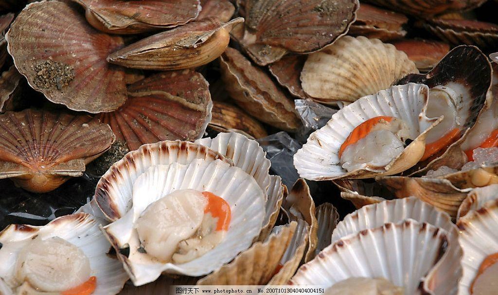 海鲜 贝壳 吃 餐饮美食 食物原料 摄影图库 300 jpg