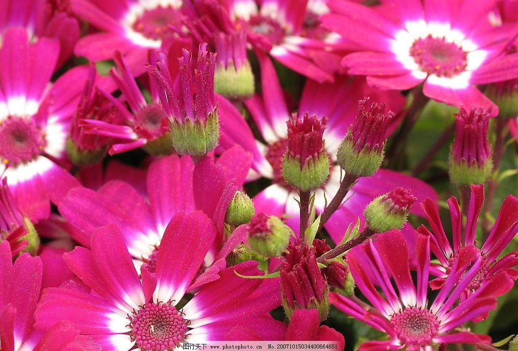 春天的花朵图片