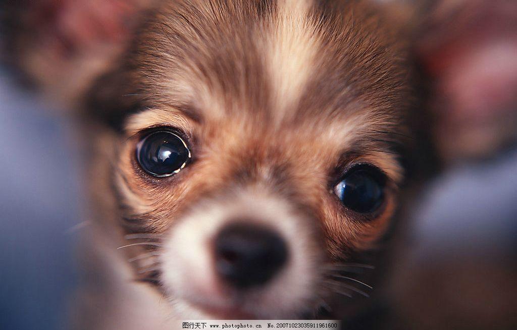 可爱猫狗 猫狗 宠物 生物世界