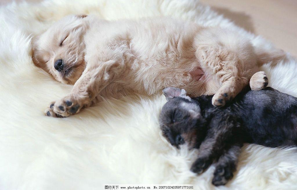 可爱猫狗图片