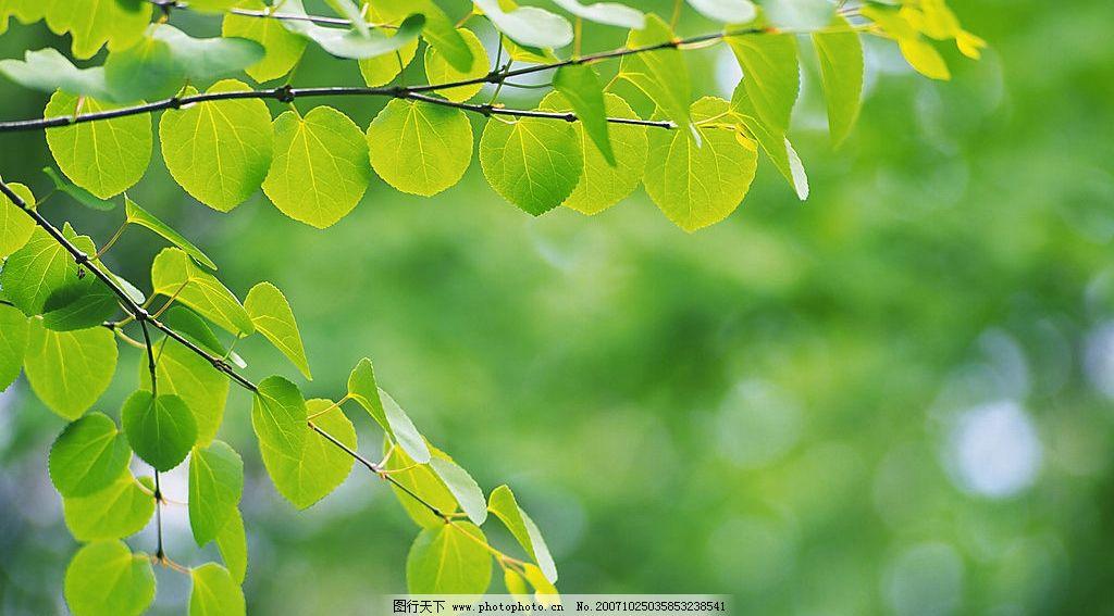 超清晰的树叶摄影 生物世界 树木树叶 绿叶摄影 摄影图库 350 jpg