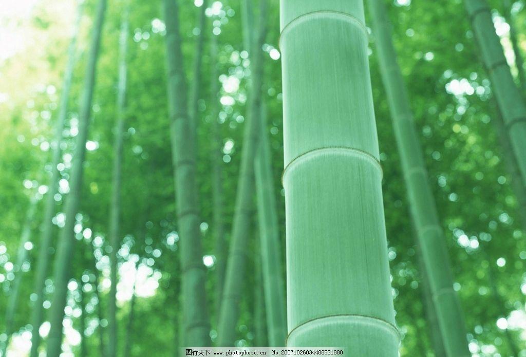 风景-竹图片