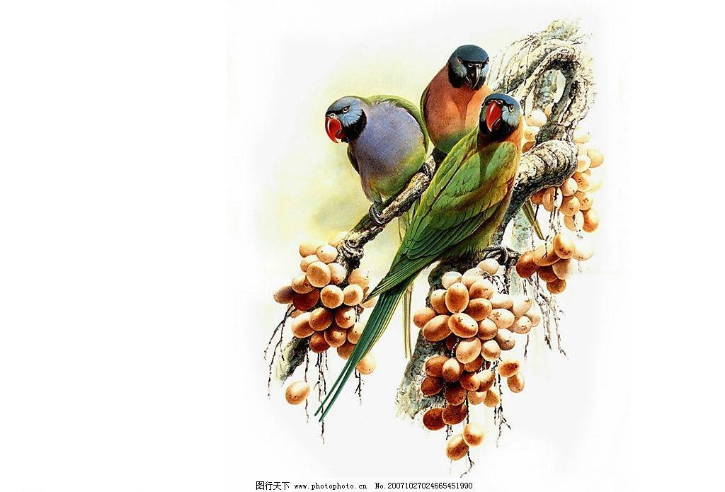 经典鸟类纸壁 生物世界 鸟类 设计图库 72 jpg