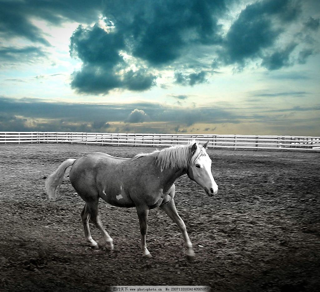 漂亮的马图片,清晰 好看才是硬道理 旅游摄影 漂亮的图片