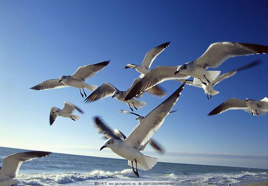 海鸥 大海 自然景观 自然风景 摄影图库 300 jpg