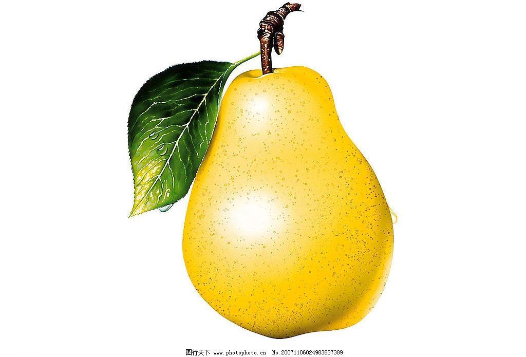 梨 生物世界 水果 水果(鼠绘) 设计图库 72 jpg