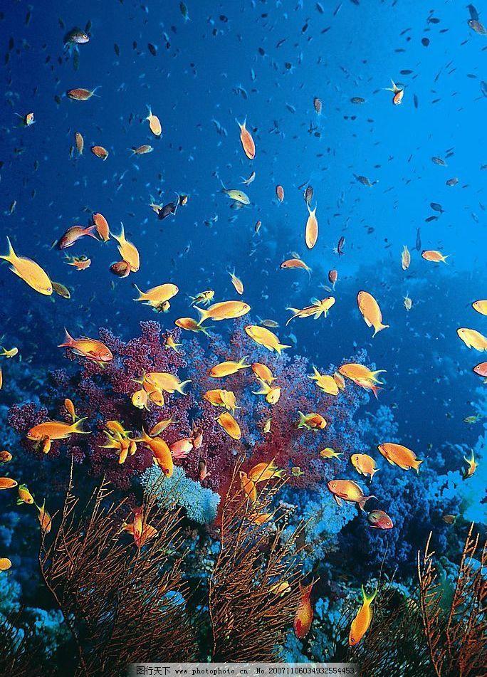 海 海底世界 摄影图库