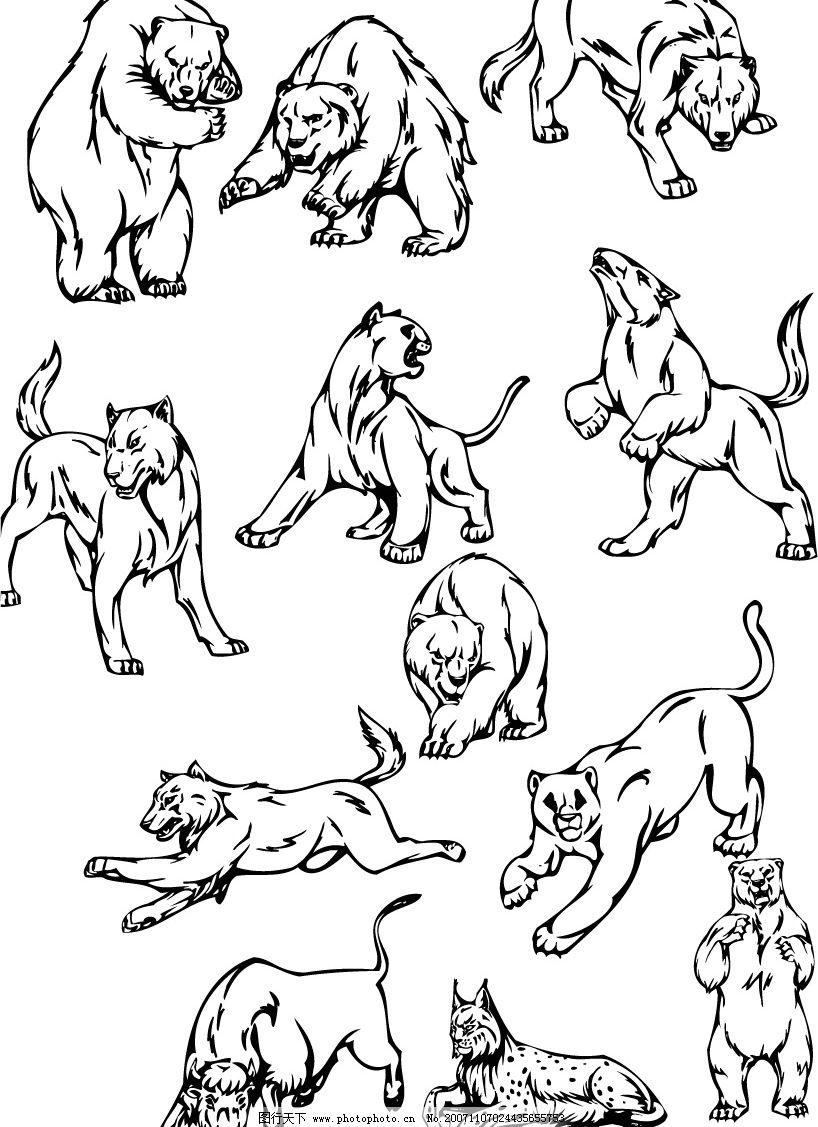 精品动物-熊狼图片
