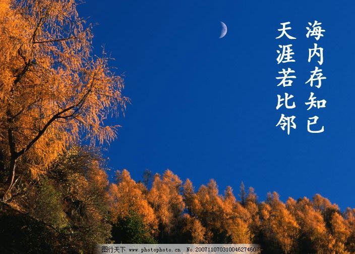 明月 树 天空 平面设计 设计作品