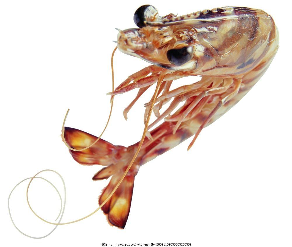 虾 psd素材 海里的生物 源文件库 动物类   psd psd分层素材 0dpi