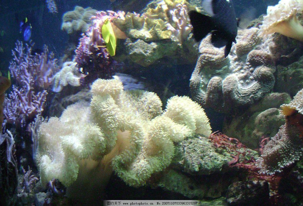 海底一角 摄影来自海洋馆 其他 个人摄影 摄影图库