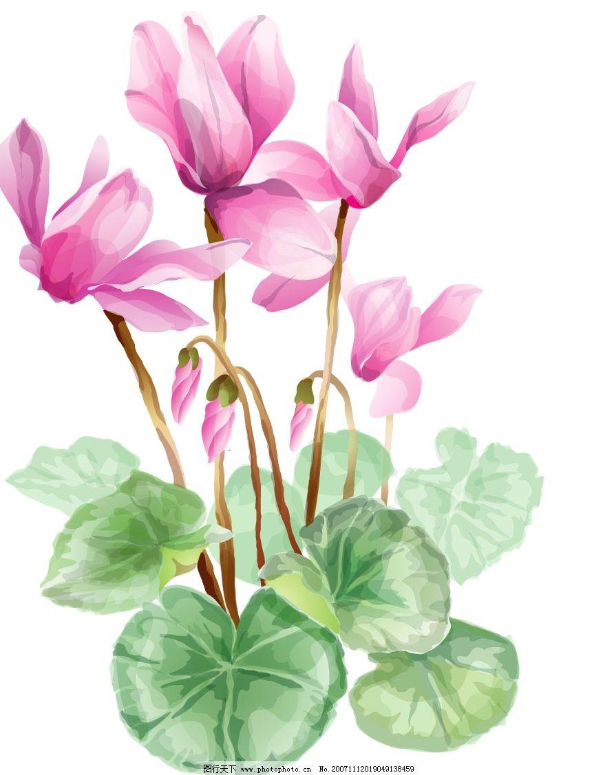 手绘莲花 超清晰 文化艺术