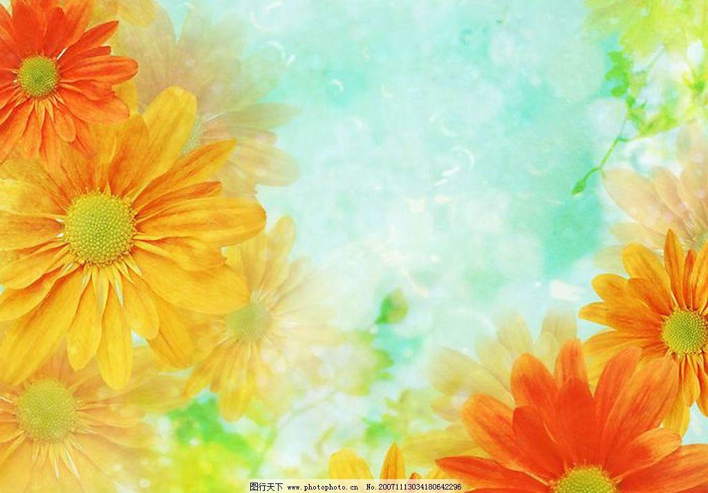 花卉9 旅游摄影 自然风景 摄影图库 300 jpg