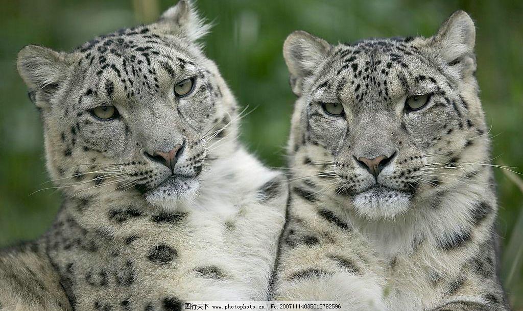 清晰野猫 生物世界 野生动物