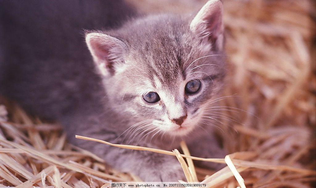 猫咪图片,生物 动物 风景 景观 摄影 环保 环境-图行