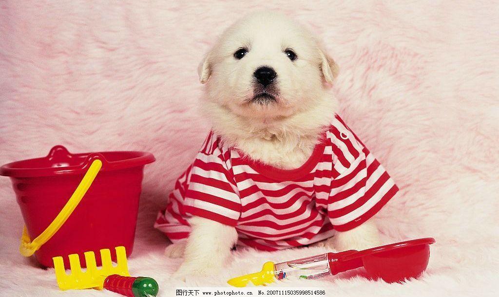 红衣服 狗 可爱狗系列 小狗 摄影图库