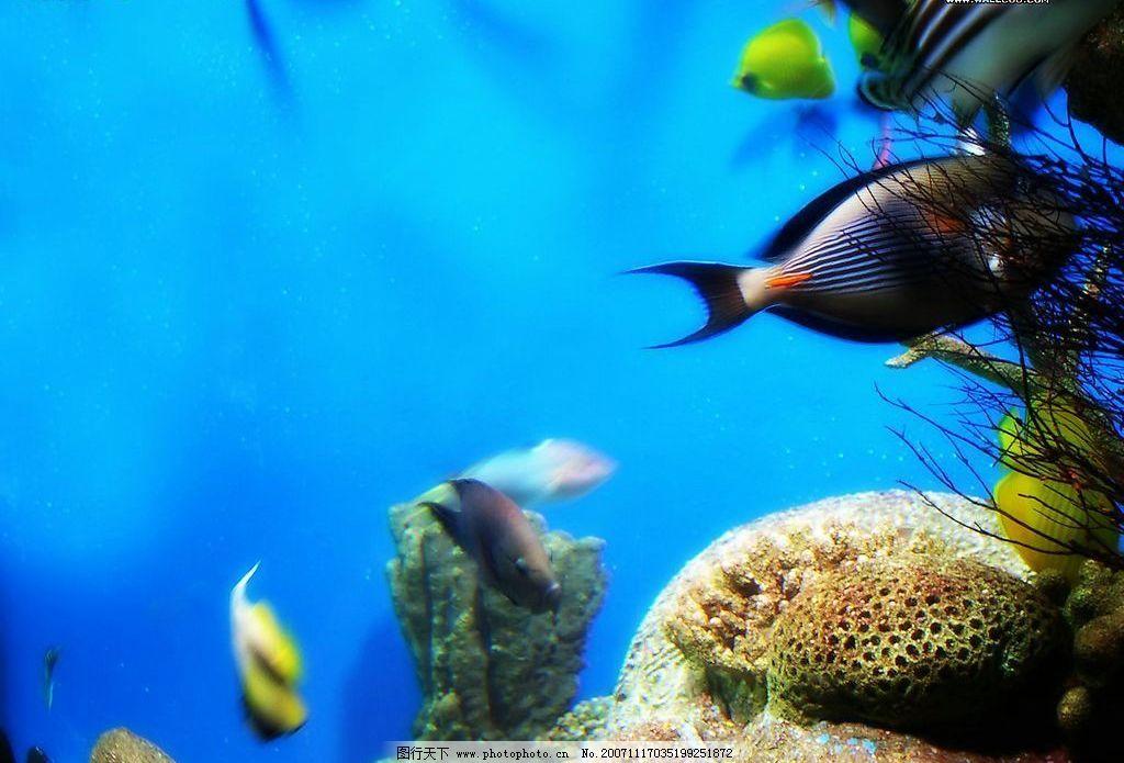 海底世界 生物世界 海洋生物 摄影图库 72 bmp