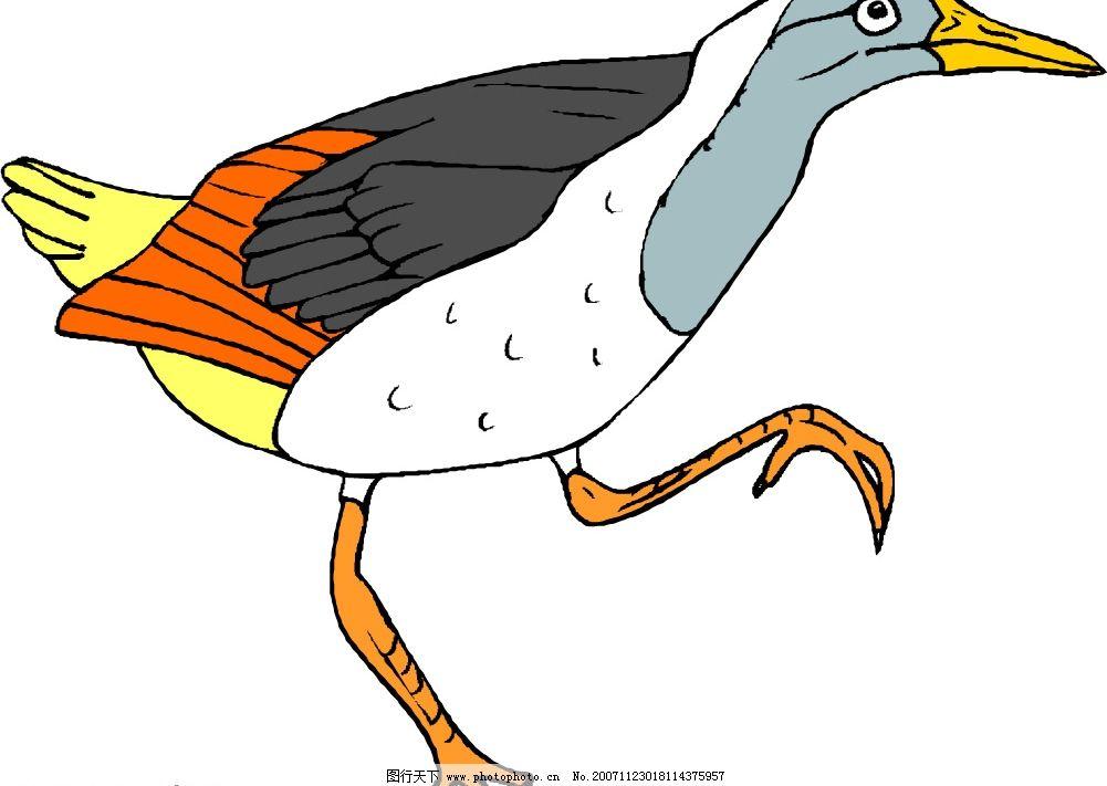 矢量动物 鸟 生物世界