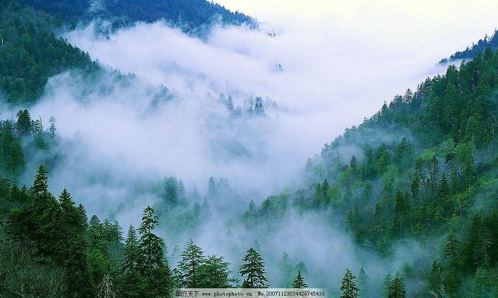 丛林之美 树林 树木 红叶 枫叶 森林 风景 背景 景色 摄影图库