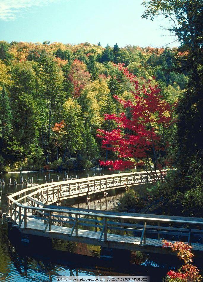 丛林 树林 树木 树 红叶 枫叶 森林 风景 背景 景色 自然景观 山水