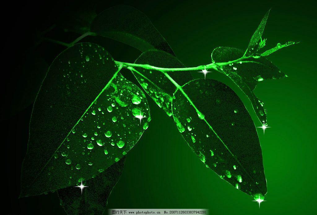 綠色壁紙圖片