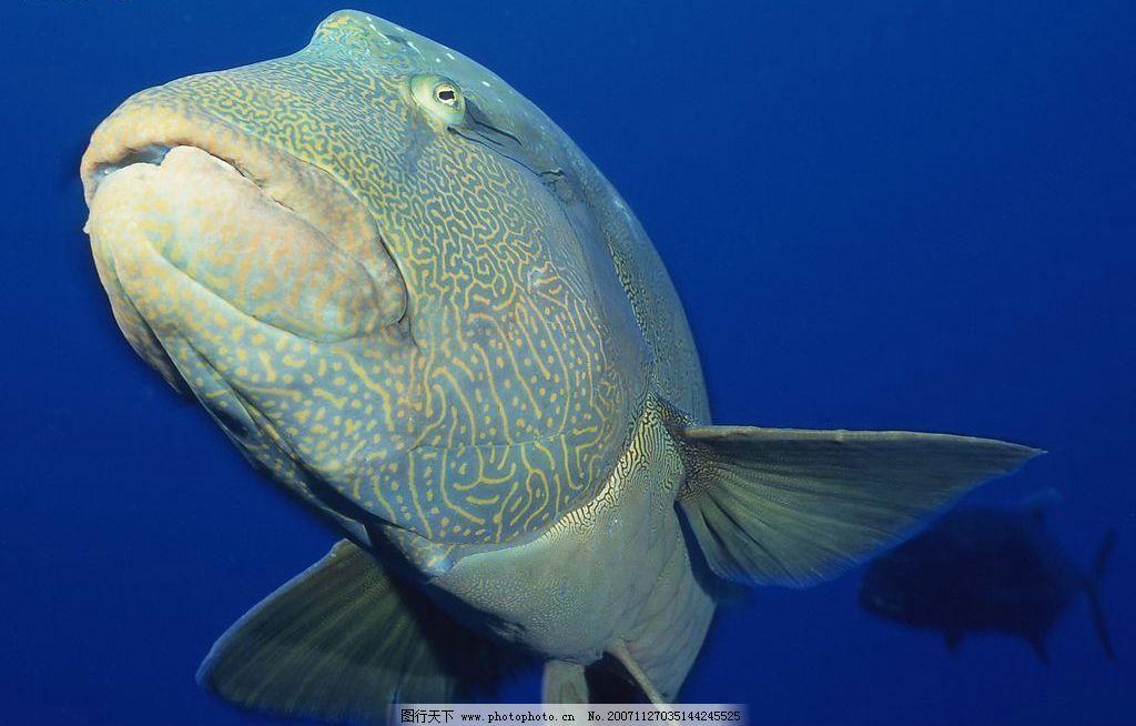 动物 海洋类 生物世界 海洋生物 摄影图库   jpg