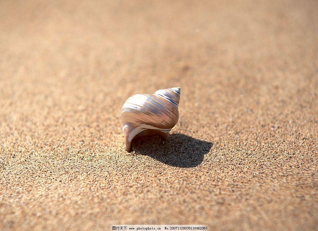 沙滩上的贝壳 生物世界 海洋生物 沙滩贝壳 摄影图库