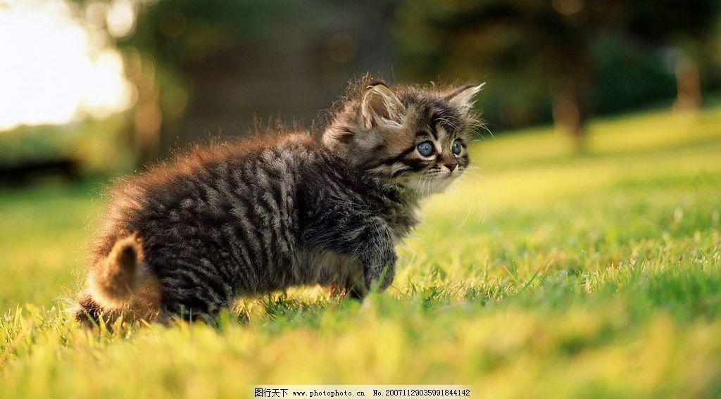 可爱猫咪 猫咪 生物世界 家禽家畜 摄影图库 300 jpg