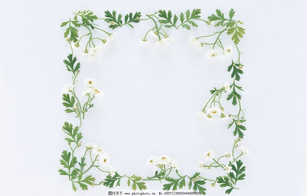 植物花朵边框4图片