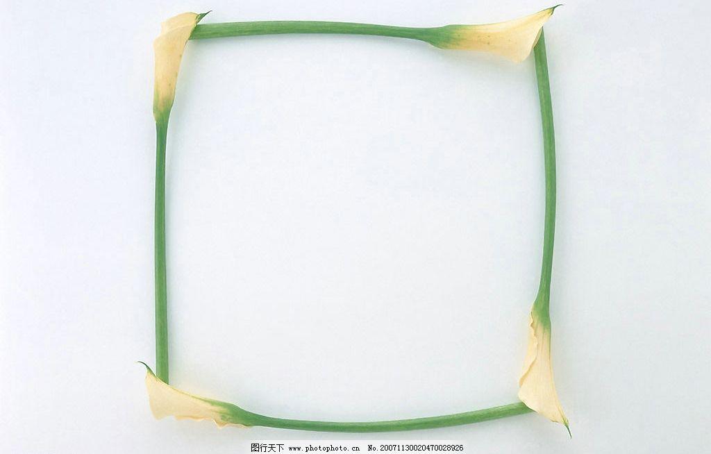 植物花朵边框8图片