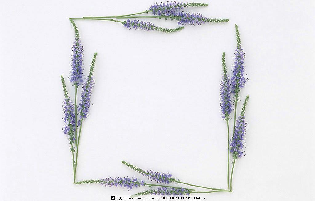 花 边框 绿叶 植物 底纹边框 边框相框 植物花朵边框 设计图库 350