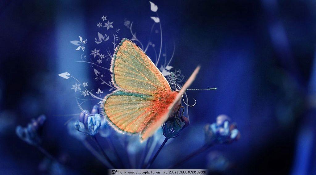 蝴蝶 自然景观 自然风景 漂亮的蝴蝶 摄影图库