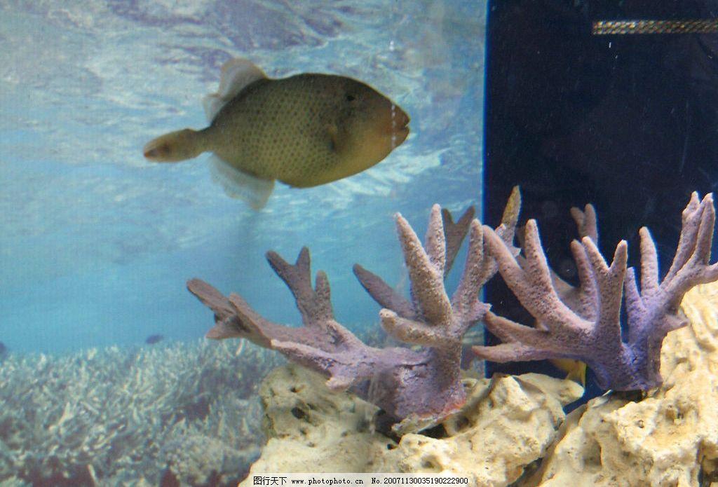 鳞鲀鱼 鱼 有毒生物 海洋生物 热带鱼 生物世界 危险水生物 摄影图库