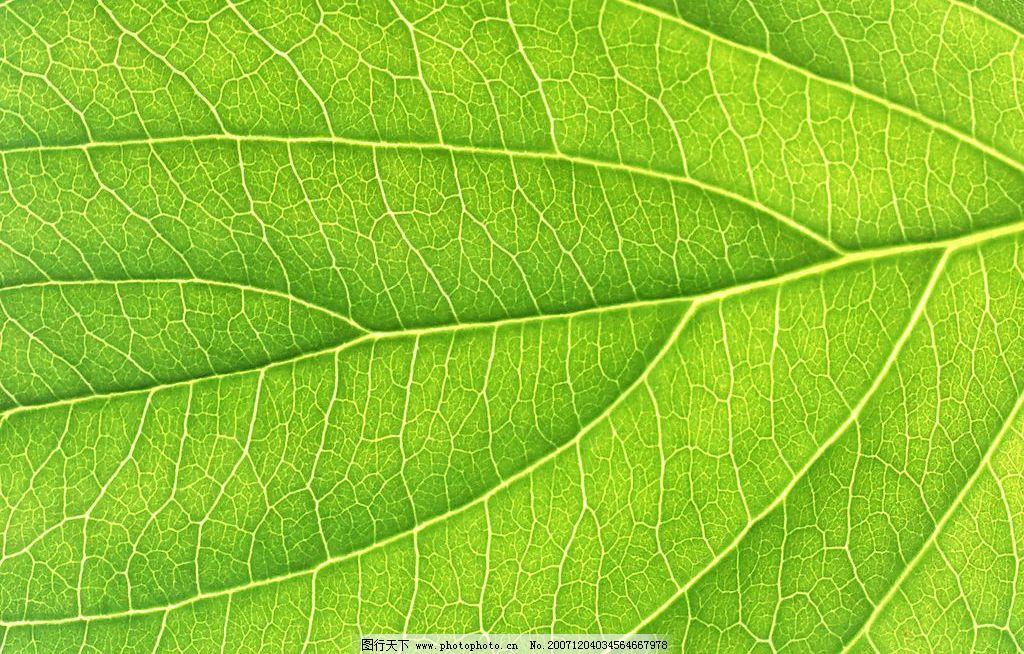 植物孔纹导管手绘图