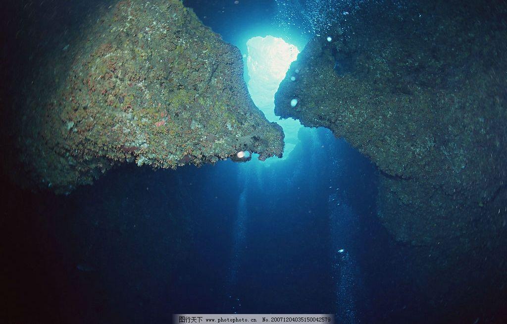 海底世界 海洋素材 生物世界 海洋生物 摄影图库 350 jpg