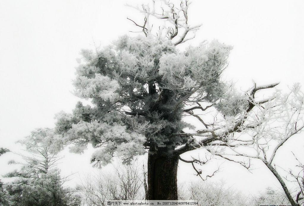 冬天的树 雪中的树 其他