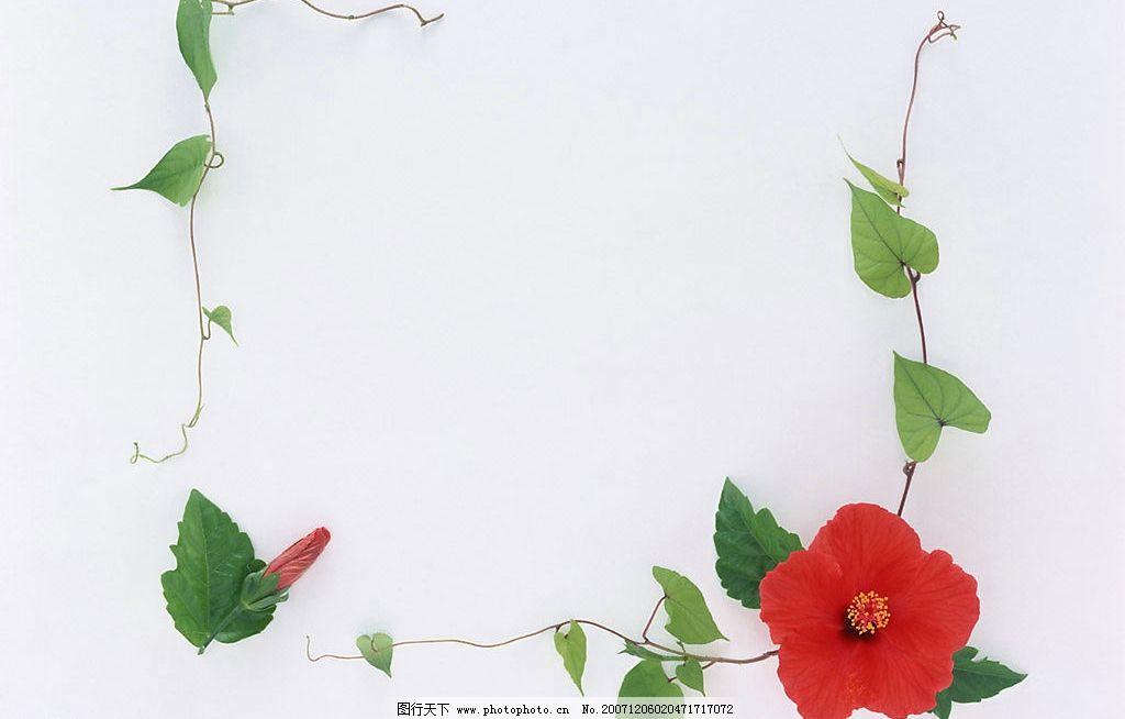 植物 花朵 边框 绿叶 底纹边框 边框相框 植物花朵边框 设计图库 350