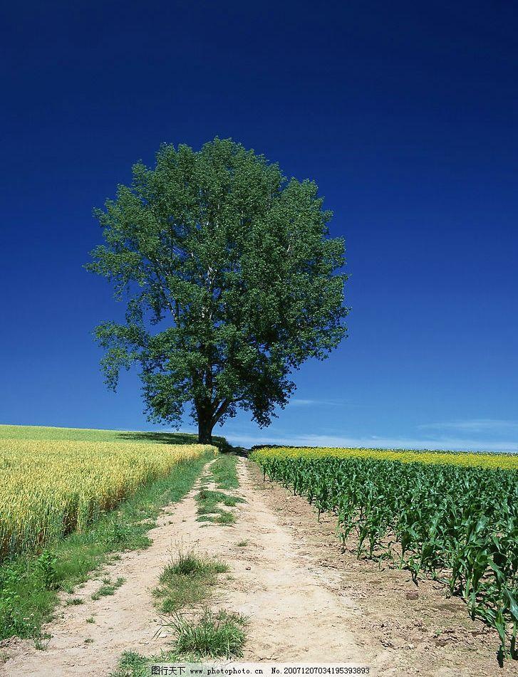 道路风景 旅游摄影 自然风景 生态环境篇 摄影图库 350 jpg
