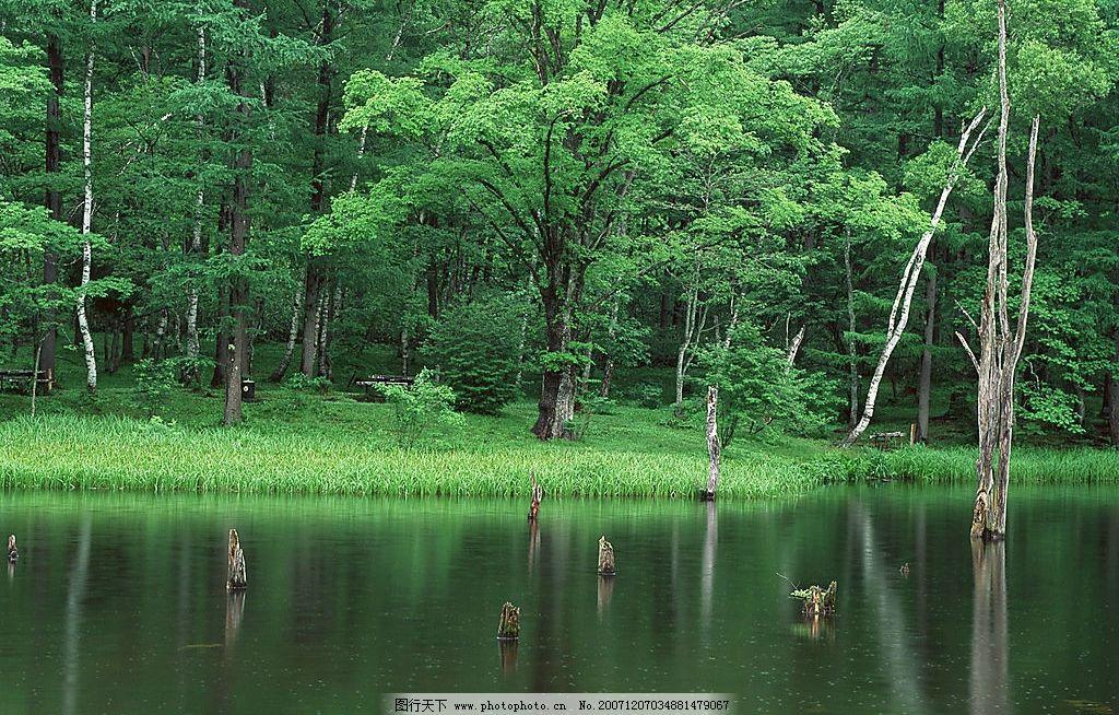 清秀树林 树木,风景,水 自然景观 自然风景 摄影图库 350 jpg