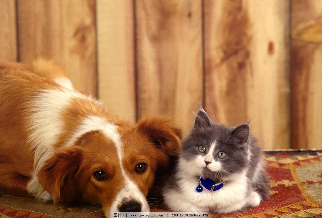 动物 狗猫 宠物 其他生物 动物植物 摄影图库