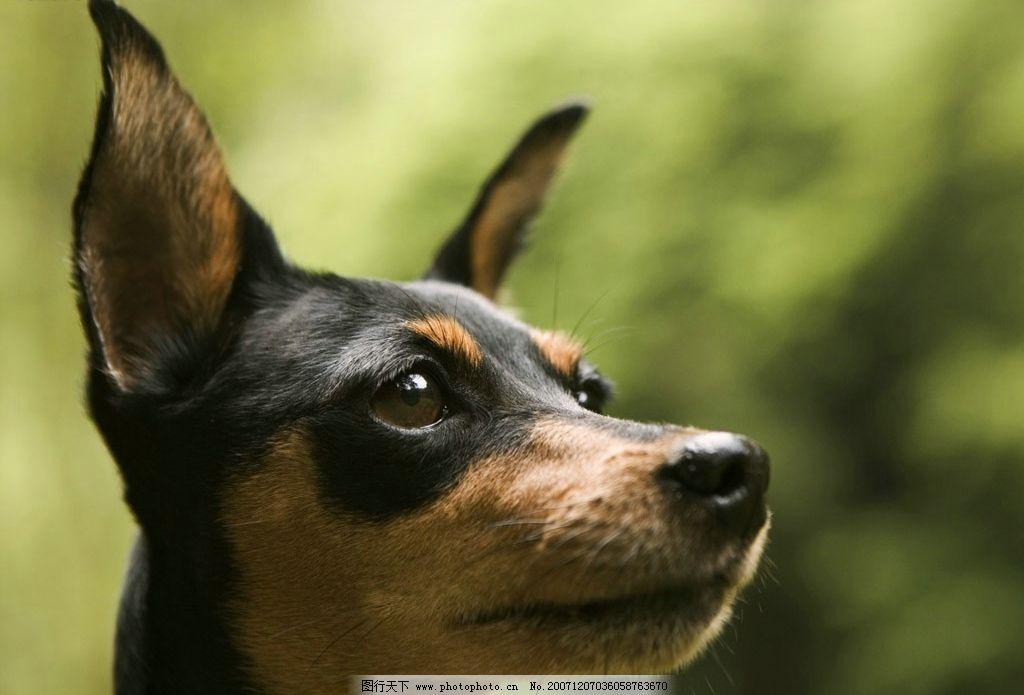动物 狗 宠物 生物世界 其他生物 动物植物 摄影图库   jpg