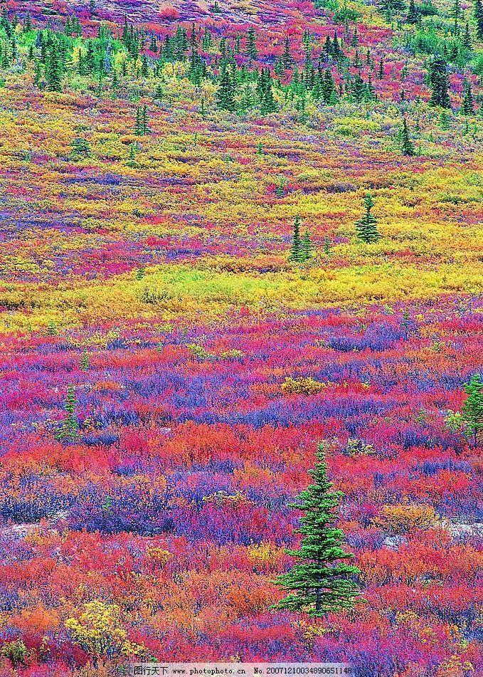 花海 树与花的交相辉映 自然景观 自然风景 森林树木 摄影图库 72 jpg