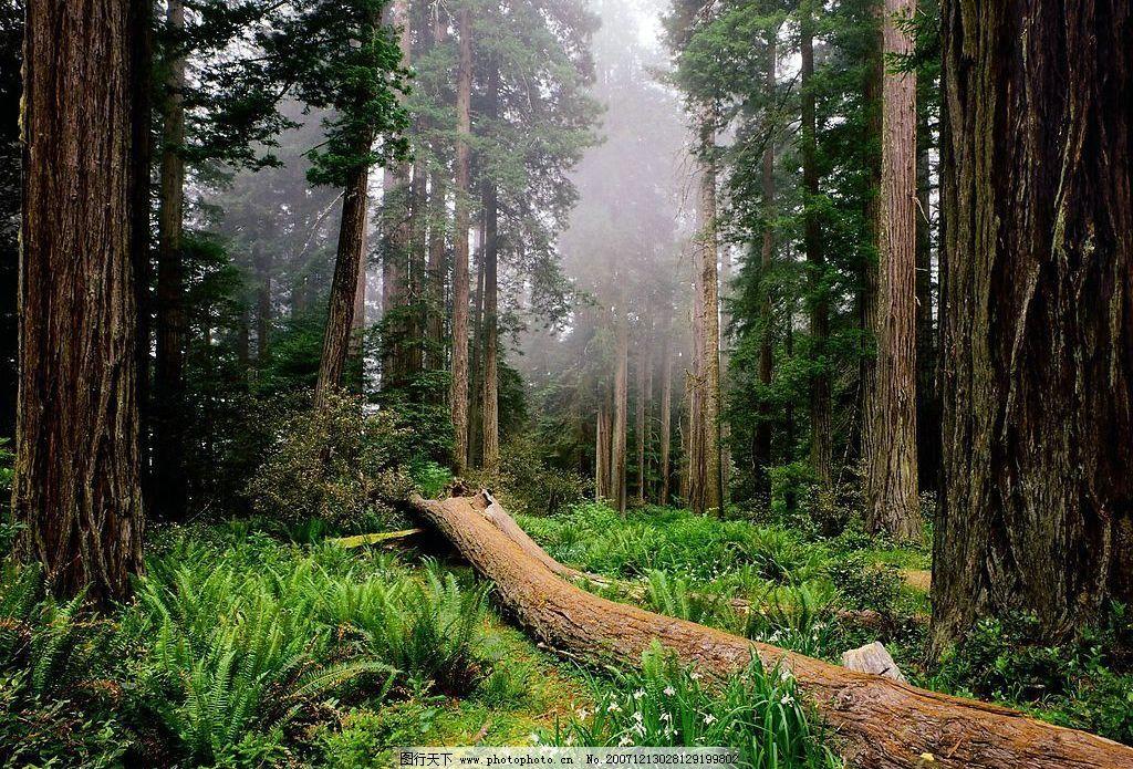 森林 看看哈 环境设计 景观设计 动物 设计图库 72 jpg