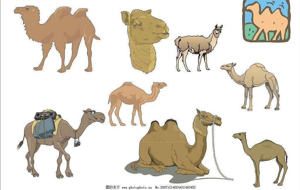 精选coreldarw矢量图——骆驼01图片