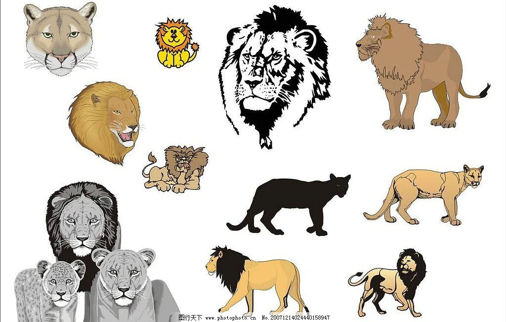 精选coreldarw矢量图—猫科动物03(狮子)图片