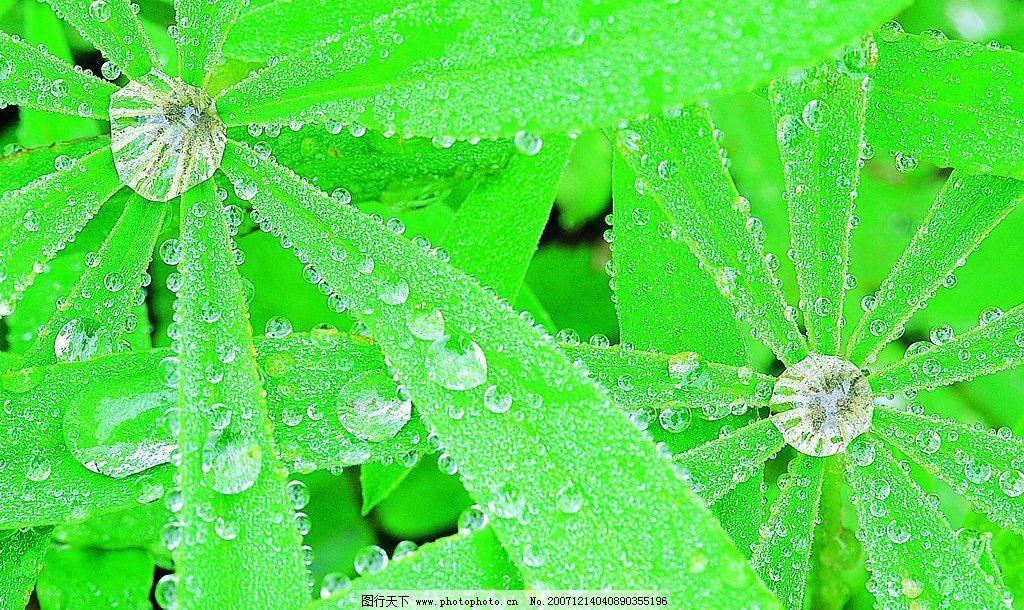 美丽的 滴水 领域 水珠 树叶 其他 图片素材 摄影图库 72 jpg